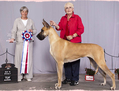 Rose - BIS CFC ELITE CH / BIS RBIS BISS (CKC) GRAND CH EXCELLENT / Lagarada's Magical Memories, CGN